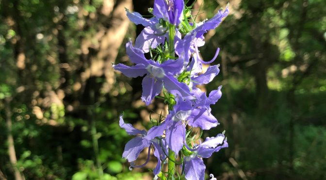 IMAGE GALLERY: Native Plants Returning to Restored Areas along Starkweather Creek